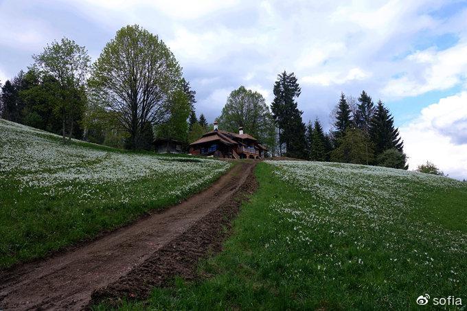"""日内瓦湖畔五月""""香雪"""",瑞士最浪漫的景观"""