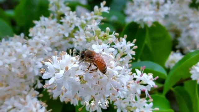 春天花花会开—春日里小腊盛开鸟语花香繁花似锦