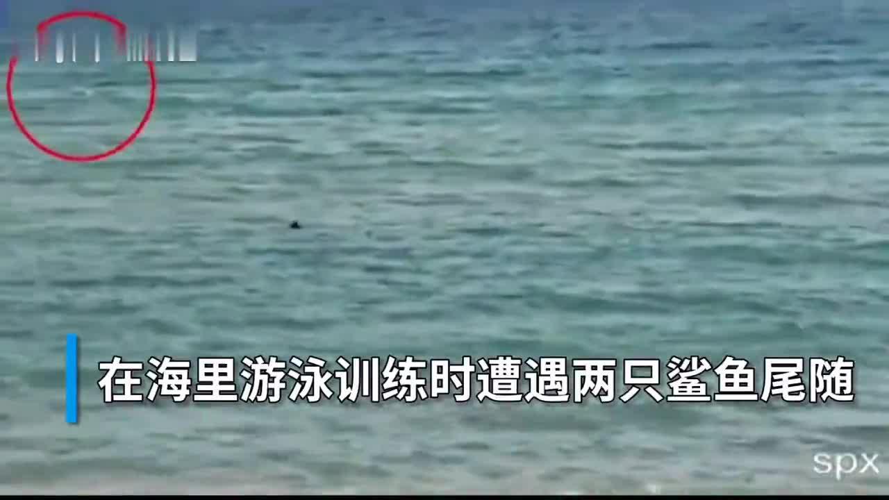 30秒丨西班牙残奥集训队队员海中训练 遇2只鲨鱼尾随