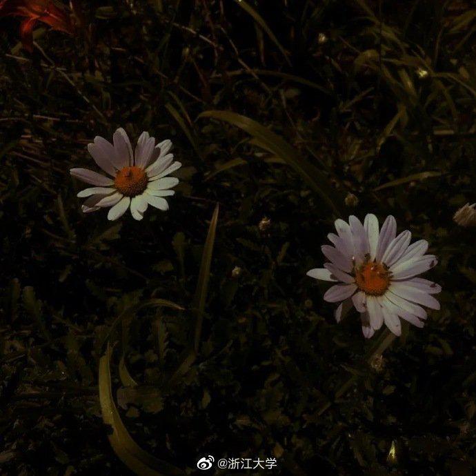 日出之美便在于它脱胎于最深的黑暗。——辛夷坞