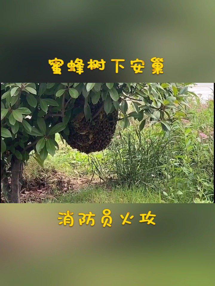 """亳州 蜜蜂安家校园树下,""""小红人""""火攻拿下"""