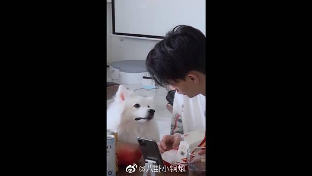 秦霄贤与狗子的日常对话!你的小可爱突然出现……
