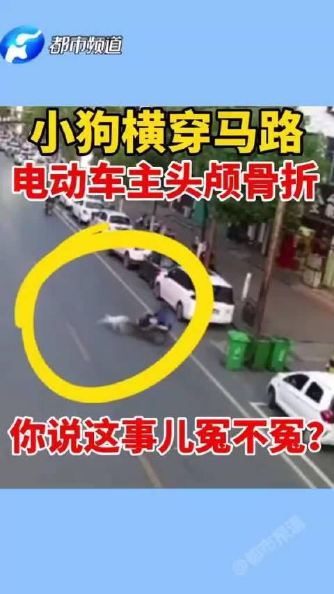 男子骑电动车撞倒伴侣动物 头部颅骨骨折