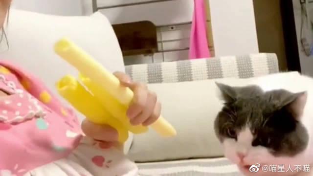 吃爆米花引来了猫咪,一不留神它就哼哧咬了一口……