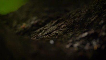 """秘境寻踪:蚁界""""鲁班""""的奇妙织巢"""