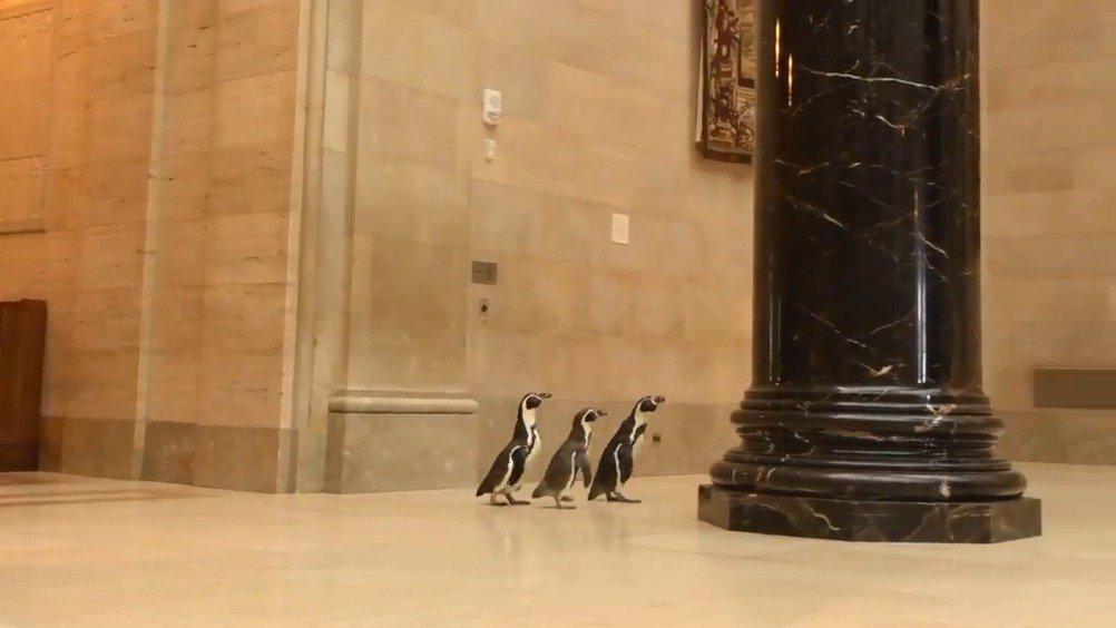 """企鹅:""""这是真品不?"""""""