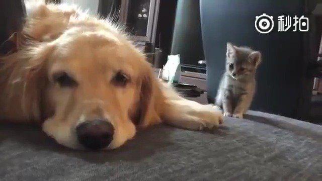 小猫咪:只能做我一个猫的大暖男……