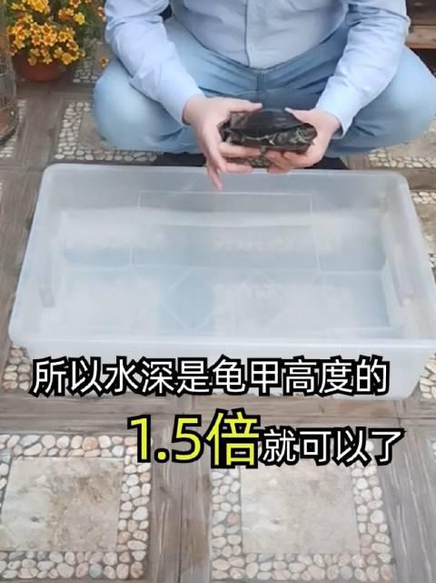 龟寿命长久,寓意吉祥,也是受到越来越多的人们喜爱了