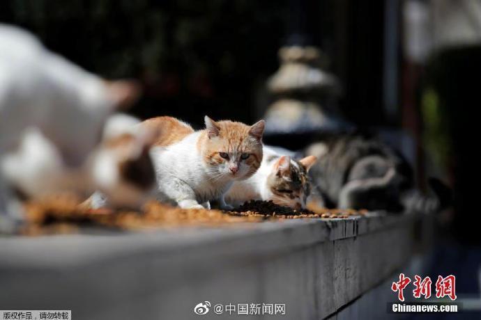 新摩天注册冠病毒列为猫狗入,摩天注册图片