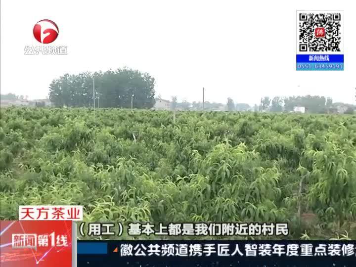 《新闻第一线》萧县:集体农庄增收  社区改善生活