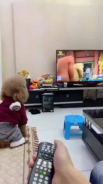 一看电视就目中无人的狗子,哈哈那个眼白笑死了