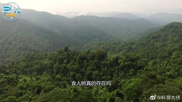 你们说,食人树真的存在吗? 科学探险队考察世界各地……