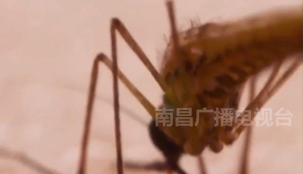 速速收藏!你要知道的蚊虫咬人时间表!