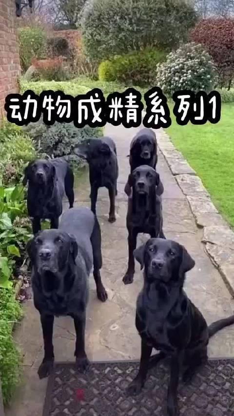 狗狗也太聪明了,还知道听自己的名字,左下角的狗狗好焦虑