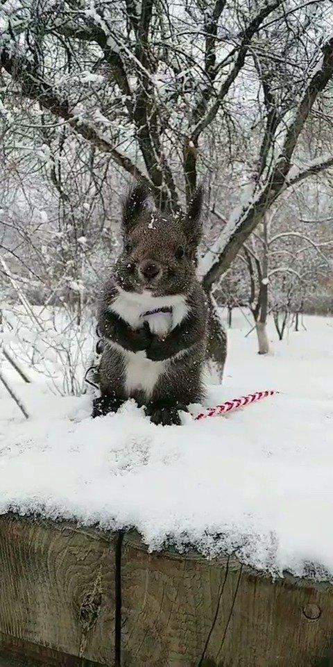 松鼠:看见没,皮草并不抗冷