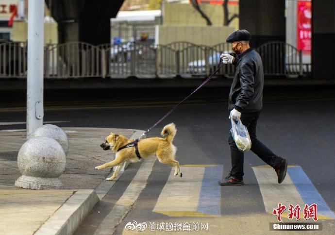 农业农村部回应狗不算养殖畜禽:不意味着不能养