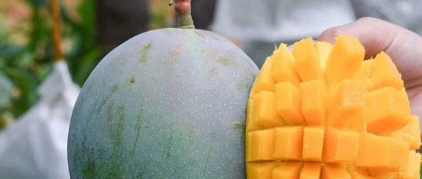 我们为广西百色乐业芒果众筹了一条公益广告:百芒乐为鲜