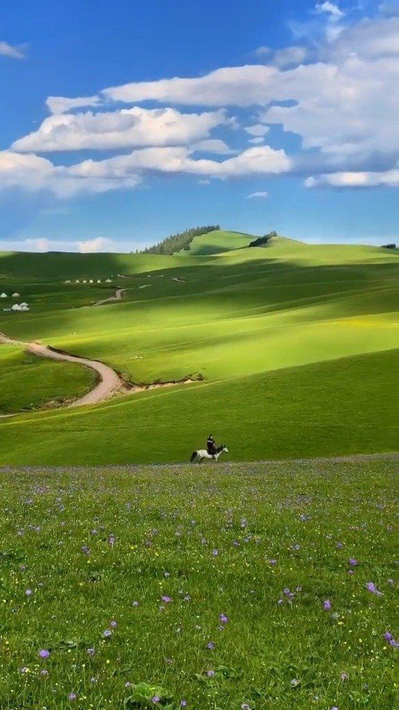 新疆伊犁的大草原