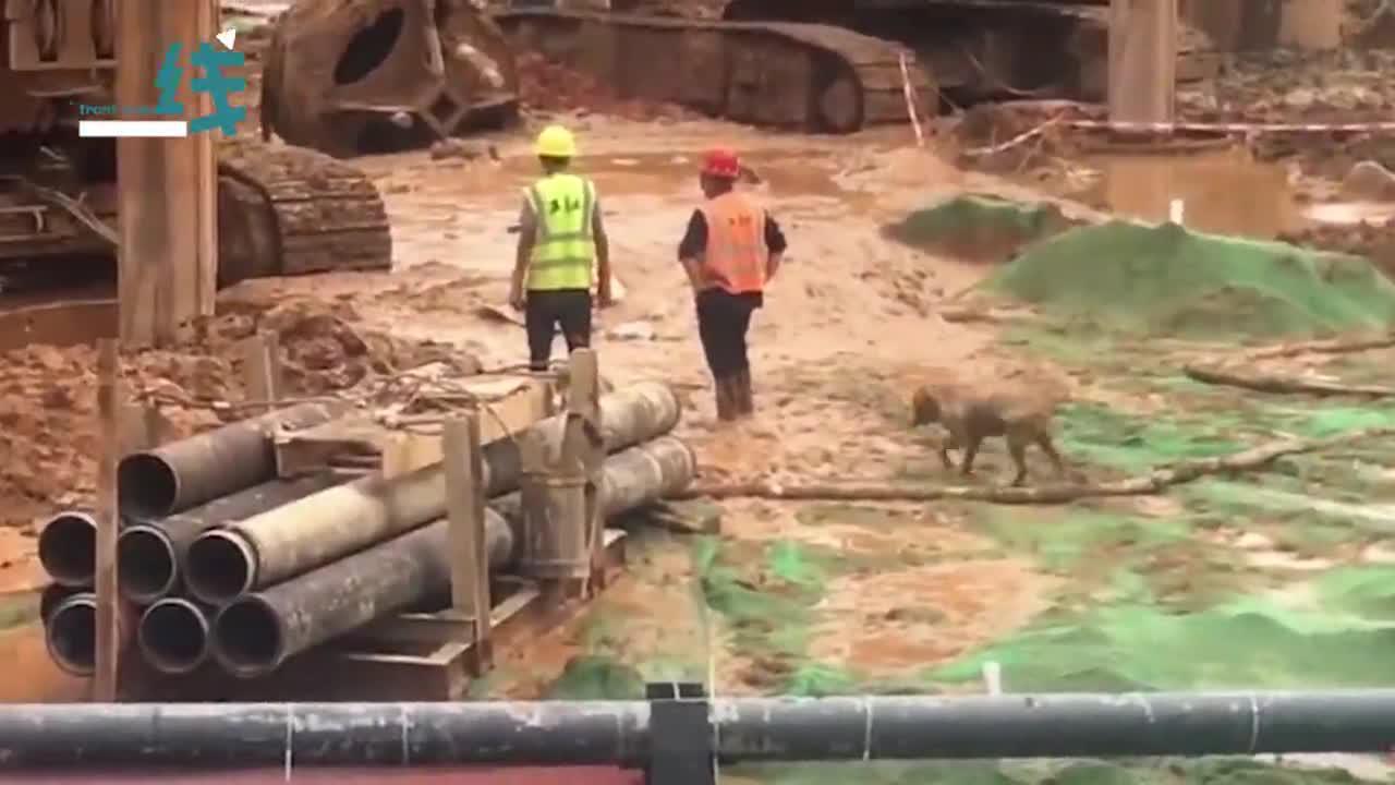 狗狗在工地实现泥坑自由 工友洗狗洗到崩溃:主人快来领走