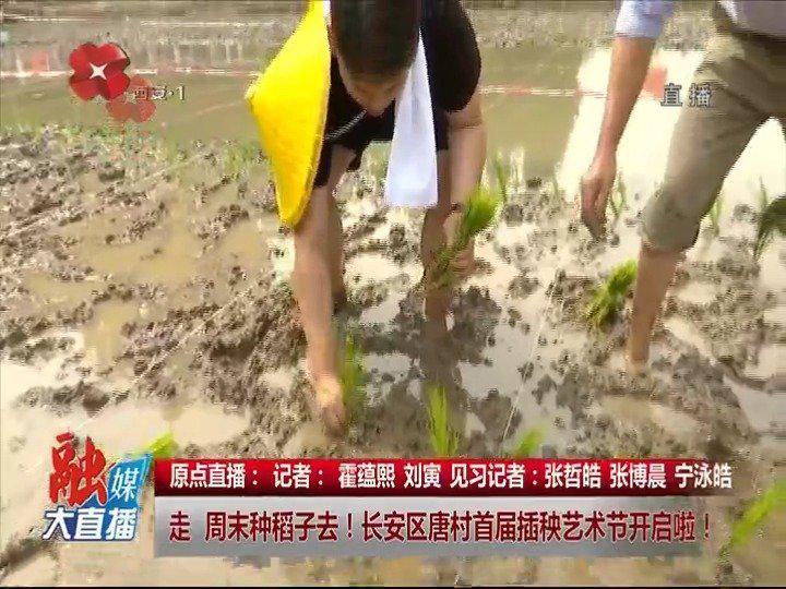 原点视频:博晨插秧忙,走种稻子去!