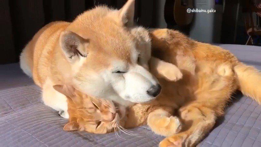 这是一场决定谁当枕头的猫狗之战