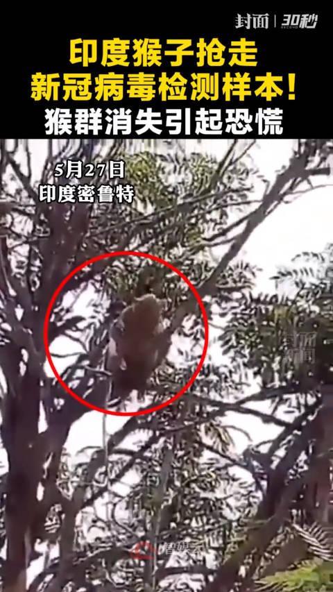 印度猴子抢走新冠病毒样本,猴群消失引起恐慌