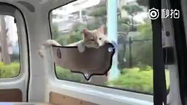 来自一位细心的网友,带着第一次坐车出门的猫咪去兜风……