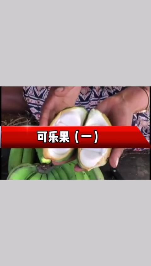 今天聊聊可乐果 视频里提到的可乐果,是一种原产于非洲的果实……
