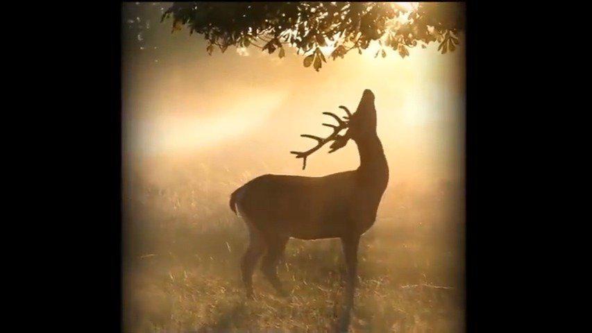 晨雾,阳光,鸟鸣,一只缓缓吃树叶的小鹿…童话一般