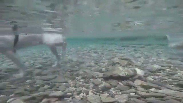 柯基:那个这水深不深啊。前面的狗:不深