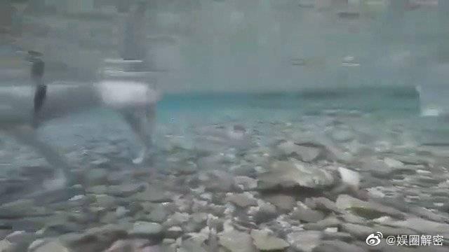 柯基:那个这水深不深啊? 前面的狗:不深!