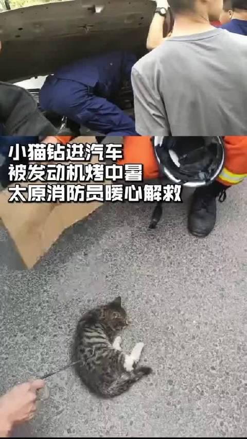 小猫被汽车发动机热中暑,太原消防员暖心解救