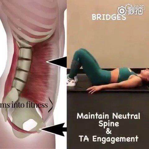 人体解剖学博士教你运动物理治疗训练动作