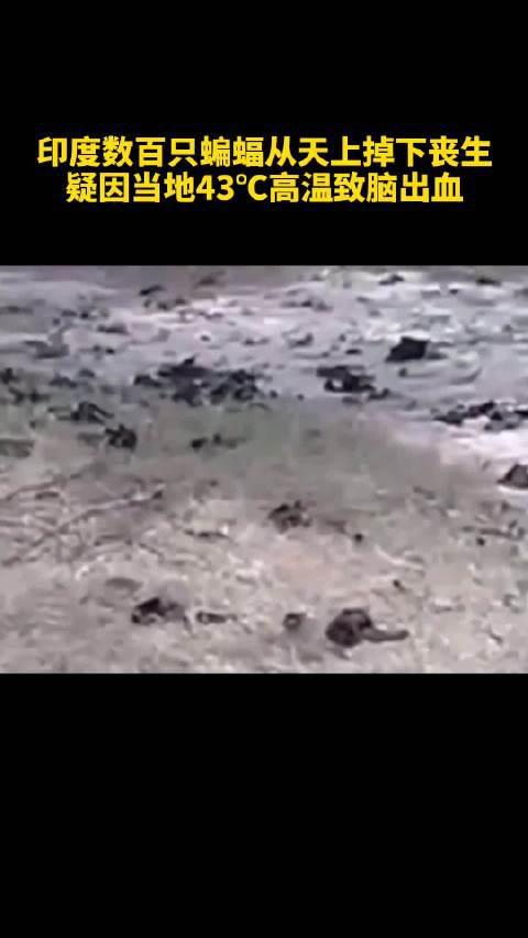 印度数百只蝙蝠从天上掉下丧生,疑因43℃高温致脑出血