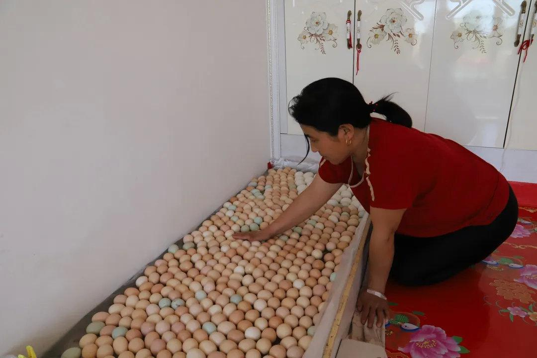 代长福的妻子看着养殖鸡下的鸡蛋