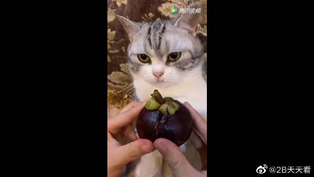 猫咪:你是不是觉得自己很幽默,看我的眼神我觉得你是个蠢货