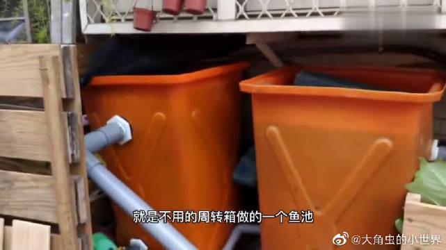 diy储物箱过滤,高密度帆布池,养锦鲤看看效果~