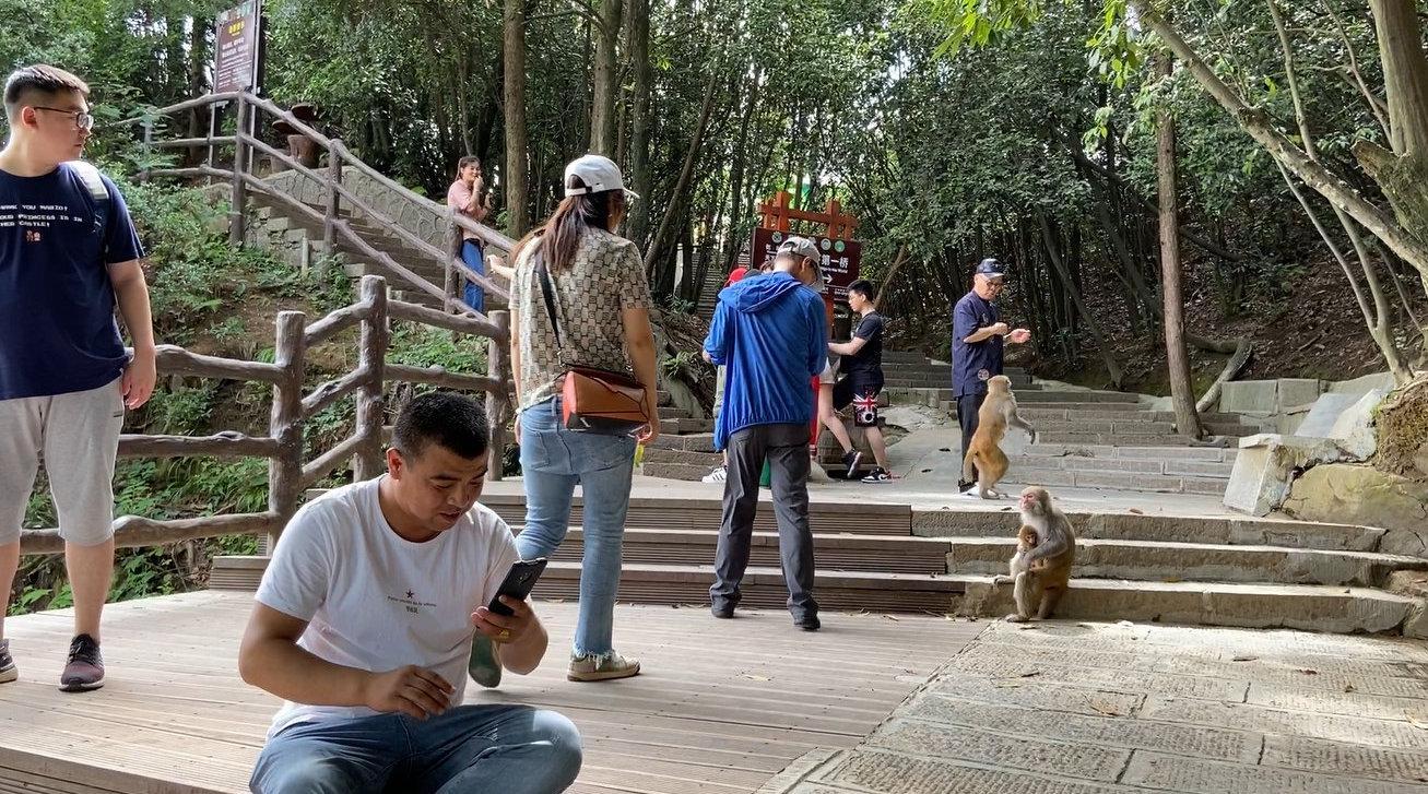 来张家界旅游怕什么?农村小伙游袁家界,看到野猴要避开
