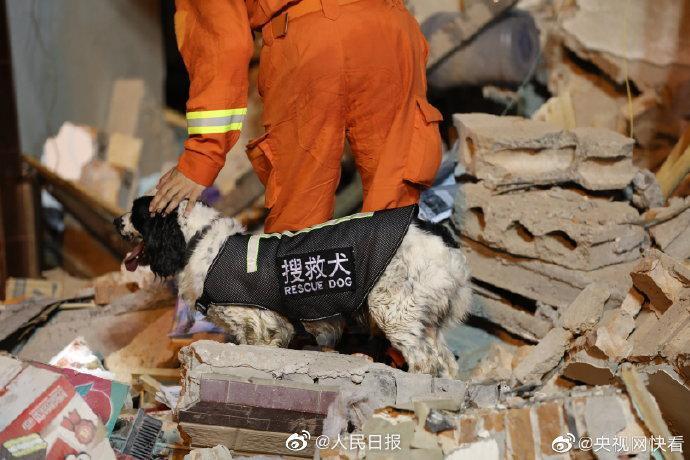 浙江温岭槽罐车爆炸事故搜救犬受伤图片