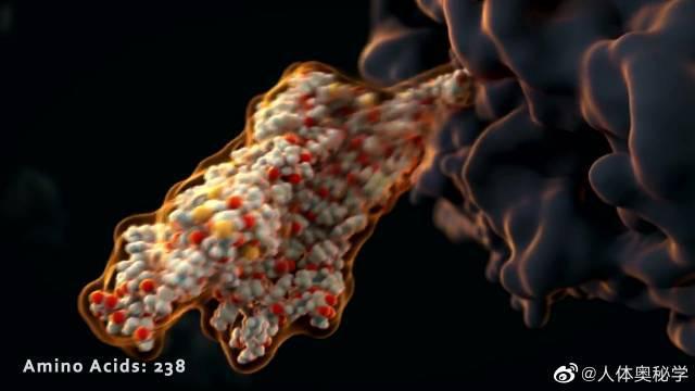 生物动画之核糖体合成肽链 一个核糖体每分钟可以组装约200个氨基