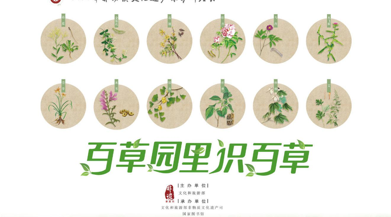 《百草园里识百草》第二集来啦~黄芩、连翘、金银花……