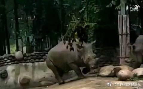 犀牛:怎么样?你这票没白买吧!