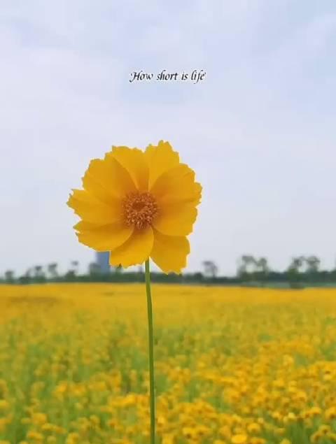 我只说从今往后,不说今日以前。——陈忠实