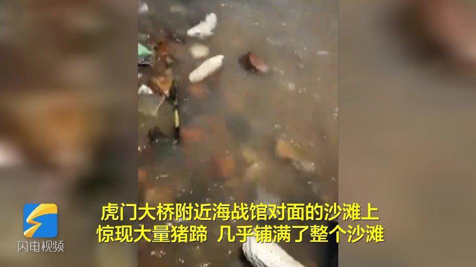 东莞海滩出现大量猪蹄 现场工作人员估测超过20吨