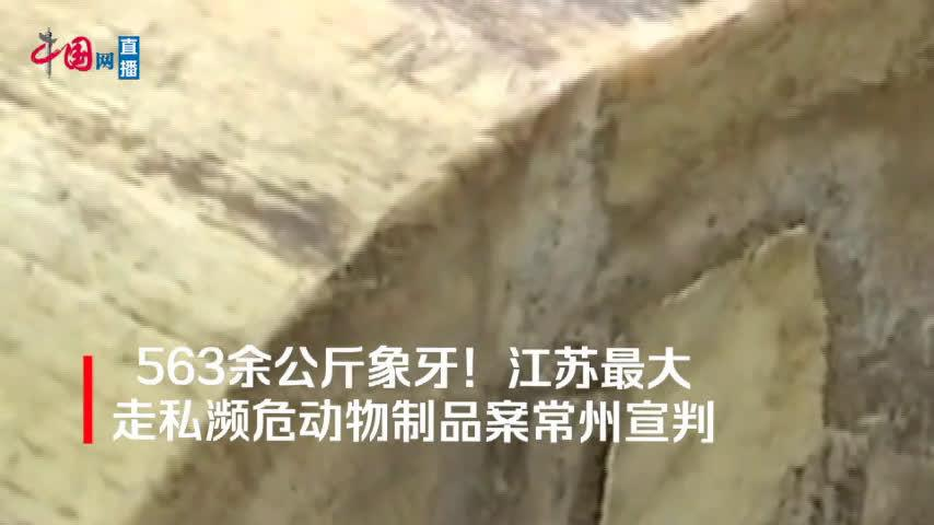 563余公斤象牙!江苏最大走私濒危动物制品案常州宣判