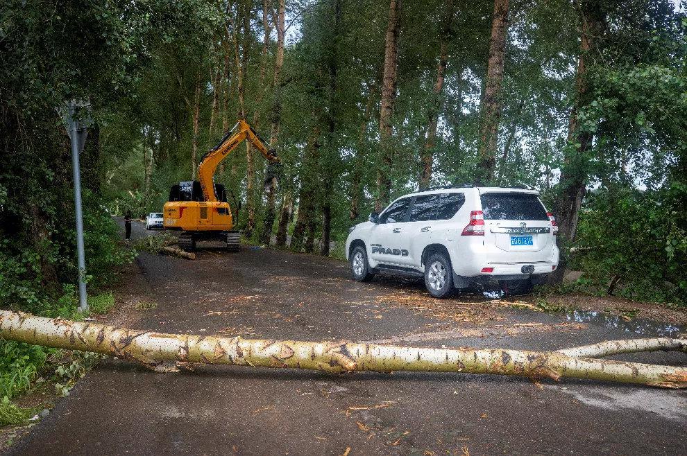 大量树木折断交通受阻