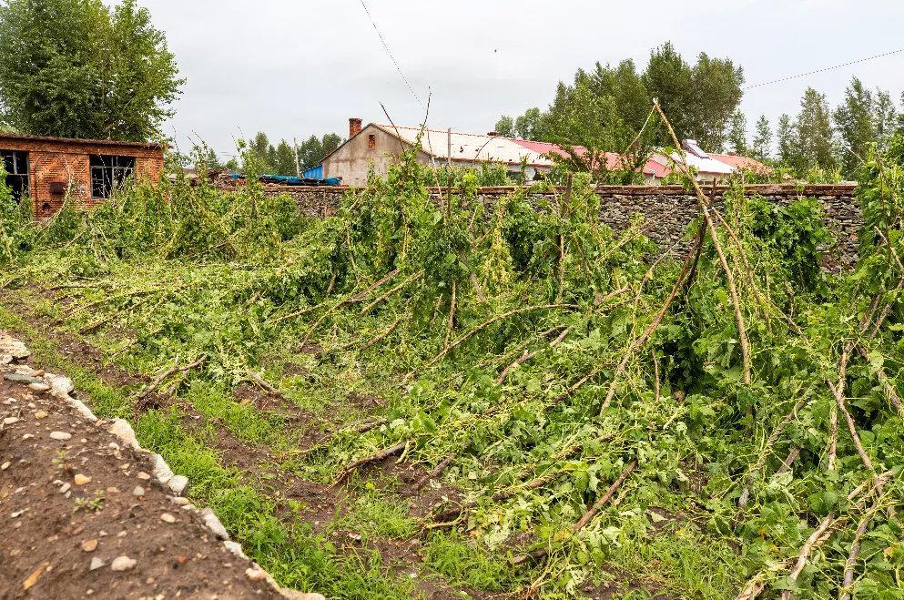 村民院子里的农作物被砸落