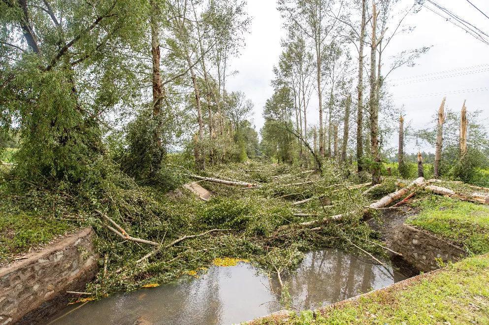水渠两边大量树木被折断