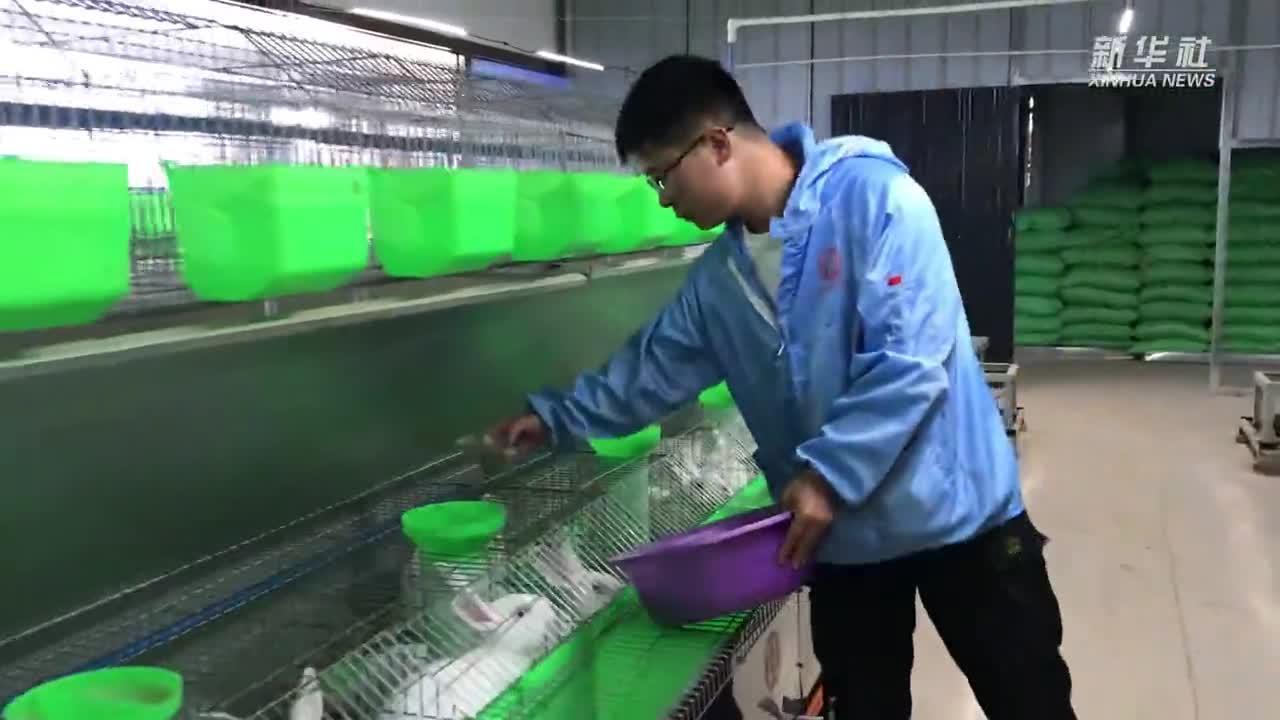 宁夏隆德千峰兔业示范园区:种兔3000余只 预计受益人口达千余人