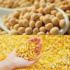 8月供需分析:玉米供需吃紧 大豆进口增加